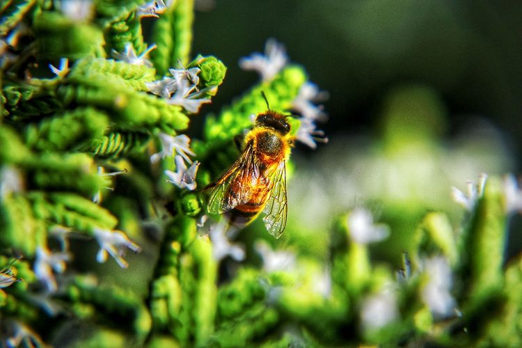 Bee Workerbee Closeup Nature Insects  Flowers In My Garden Curious Taking Photos Beautiful