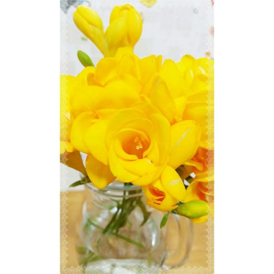 Gpro2 일상 Snap Daliy Flower