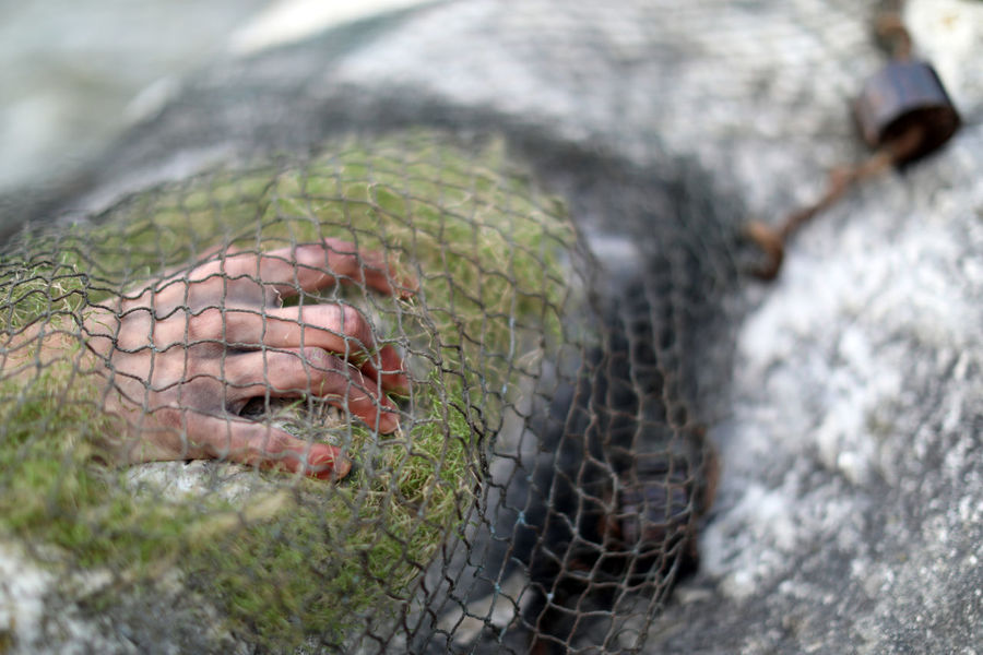 The Mermaid EyeEmNewHere Fishing Net Notte Di Fiaba Animal Wildlife Close-up Day Fishing Hand Mermaid Nature Outdoors River Selective Focus Stone Water EyeEmNewHere
