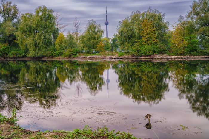 Toronto jungle EyeEm Best Shots - Nature A7RII Sony Alpha Sony Landscape EyeEm Best Edits EyeEmBestPics EyeEm Selects EyeEm Gallery EyeEm Nature Lover EyeEmNewHere EyeEm Best Shots Canada Toronto CN Tower Reflection Tree Water Lake Nature No People Outdoors Beauty In Nature Animal Themes Growth Tranquility Tranquil Scene Day Scenics Sky
