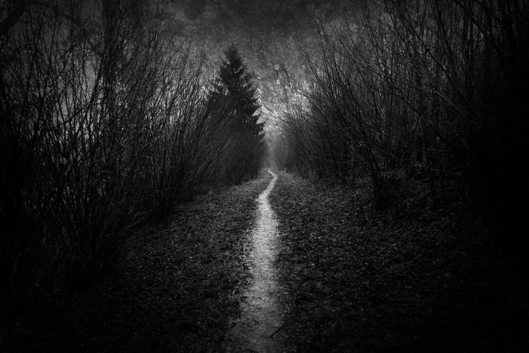 Path leading into the distance Dark Dark Forest Forest Path Ghostly Gothic Path Road Atmospheric Mood Dark Woods Haunting  Landscape Lonely Path Moody Moving Onwards Nature No People Onwards Outdoors Path In Forest Path In Woods Scary Spooky The Way Forward Tranquil Scene Wet Pathway