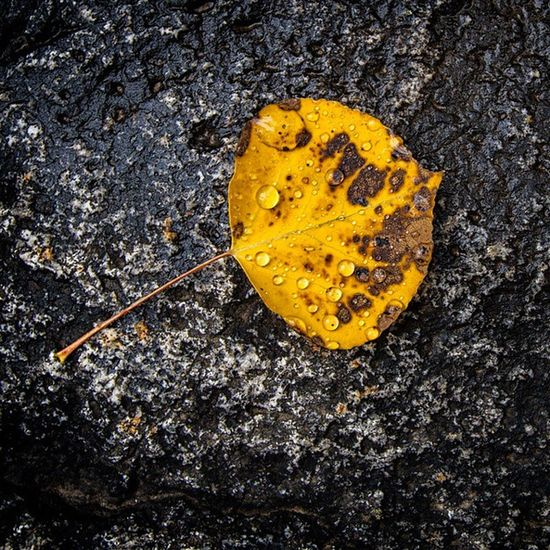 Rain drop covered Autumn leaf Utah Autumn Rain