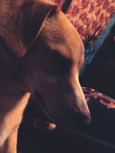 Мой пес