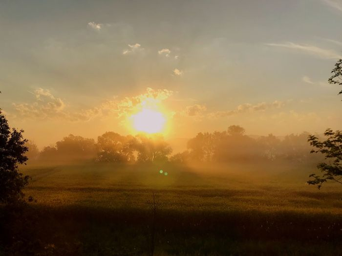 Field in the Fog Sky Plant Beauty In Nature Tree Sun Sunset Scenics - Nature Tranquility Tranquil Scene Field Environment Sunlight Landscape Land Nature Growth Idyllic No People Sunbeam Cloud - Sky Capture Tomorrow