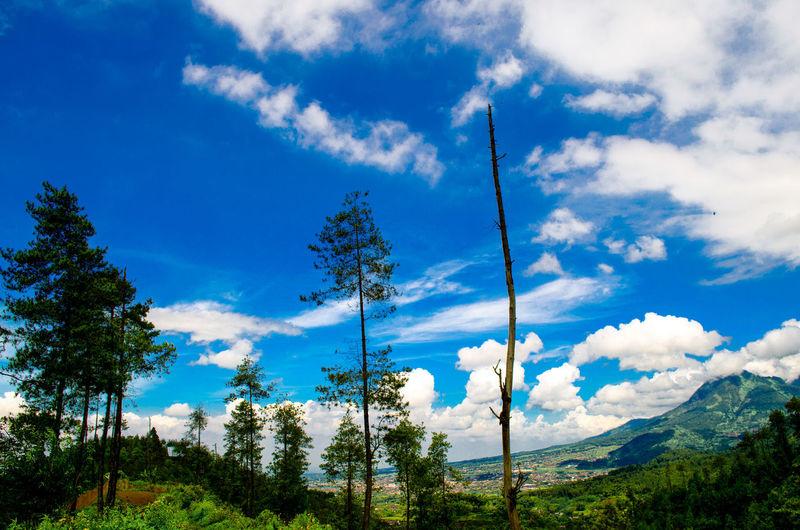 Mountain View View Pemandangan ALaM Pemandangan Alam Pohon Hutan Green INDONESIA Pine Tree Gunung Pegunungan Cloud - Sky Tree Sky Mountain Outdoors Nature Day Landscape Beauty In Nature Blue No People