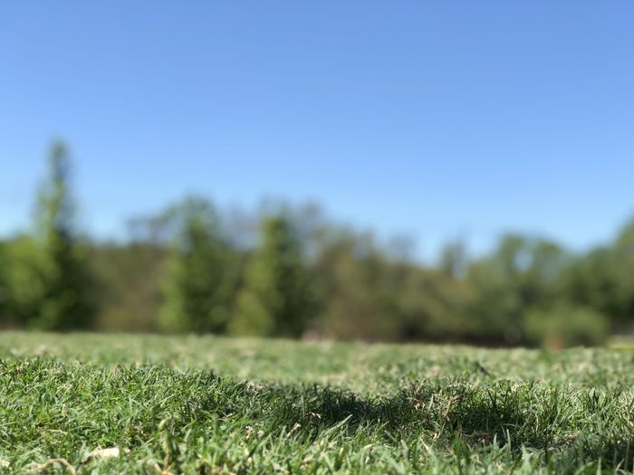 Plant Grass Sky