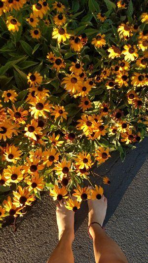 Downbythebay 🌷 Flowers 🌹 Boulevard Flowerpower Flowers Flowerpower🌸 Flowerporn Yellow Flower Ftfeet