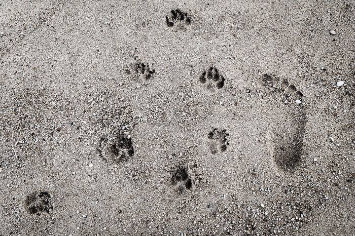 Several footprints and one of people on sand Paw Print FootPrint Beach Animal Track Track - Imprint Close-up Dog People Togetherness Sands Abstract