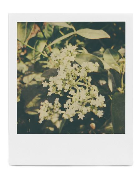 Plant Transfer Print Auto Post Production Filter No People Flower Flowering Plant Nature
