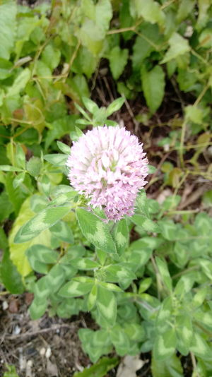 Flower Plant Nature Fragility No People Flower Head Day Outdoors Close-up Growth Beauty In Nature Freshness