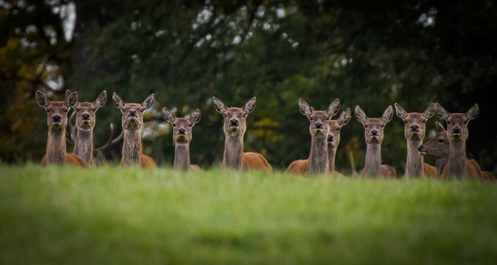 We see you Nature_ Collection  Naturelover Looking At Camera Nikon Deersighting Deer Nikonphotography Countryside EyeEm Best Shots Eye4photography  EyeEmBestPics EyeEm Gallery Plant Field Tree No People Grass Nature Landscape Green Color Beauty In Nature