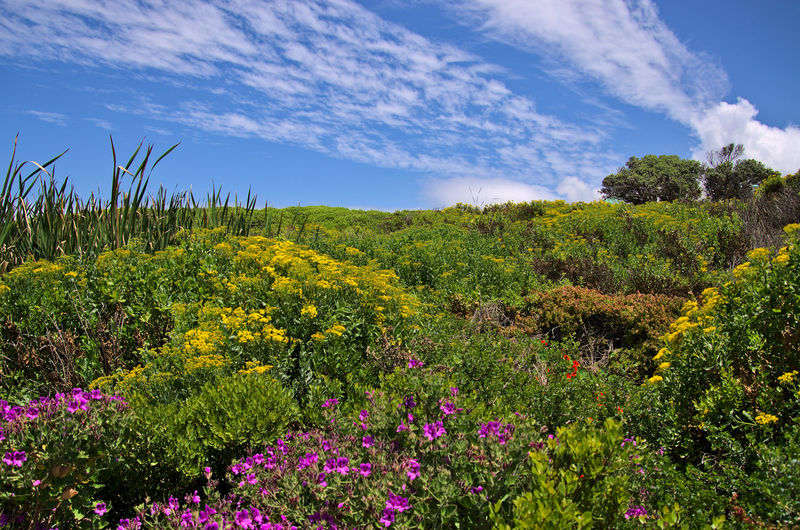 Scenic view of flowering plants on land against sky