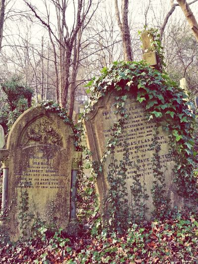 Nature Is Coming Back Graves Gravestones Highgate Cemetery Rest In Peace ❤ London Cemetery Photography No People Day Tree Outdoors Branch Close-up Nature