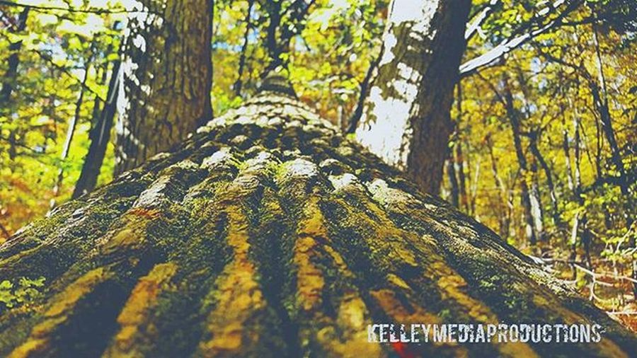 🌳 Kelleymediaproductions Art Nature Naturephotography Trees Hiking Hikingphotography Color Colorphotography Photography Photographersofinstagram Canon Canonphotography Stayrad