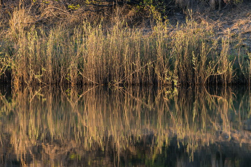 Calm Grasses Grasses And Sun Morning Light Nature Outdoors Reflection Riverfront Symmetry Tranquil Scene Tranquility Water