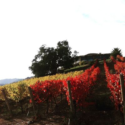 Contrates ❤️ colores de otoño Instawine WinesOfChile