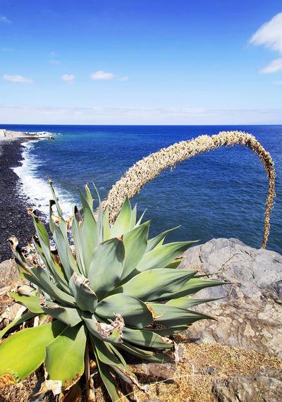Cactus growing on rock overlooking sea against blue sky