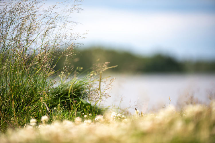 Hanging Out Plant Taking Photos Tranquility Beauty In Nature Close-up Day Field Grass Green Color Growth Land Landscape Marram Grass Nature No People Outdoors Plant Selective Focus Sky Sunlight Surface Level Tranquil Scene Tranquility Water