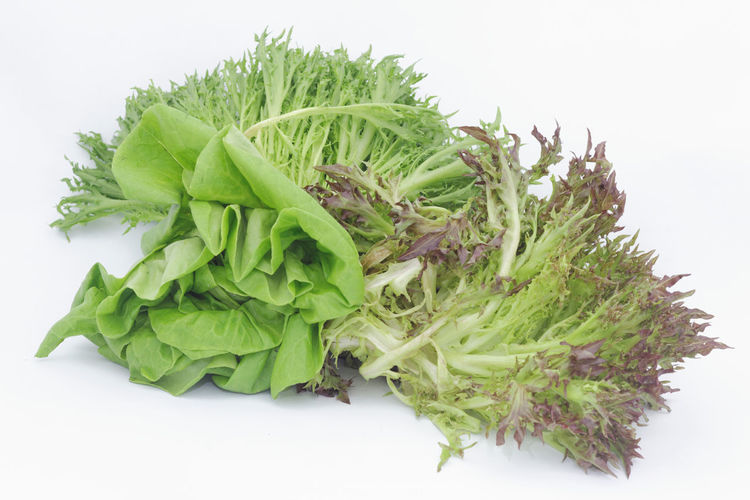 Lettuce salad on isolated white background Isolated White Background Isolated Background Vegetable Vegetables Food Butterhead Lettuce Romaine Lettuce Vegetarian Food Diet Dieting Healthy Eating Healthy Flower Head White Background Herbal Medicine Studio Shot Herb Variation Bunch Close-up Green Color Food And Drink