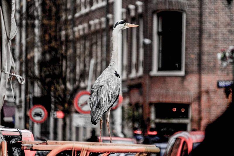 Animals Bird