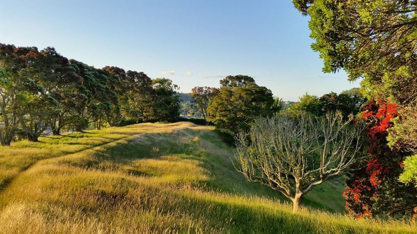 Agriculture Beauty In Nature Day Growth Landscape Nature No People Outdoors Scenics Sky Tree Water Mt St John Park Auckland New Zealand Peace And Quiet Sunset Pohutukawa Summer EyeEmNewHere Paint The Town Yellow
