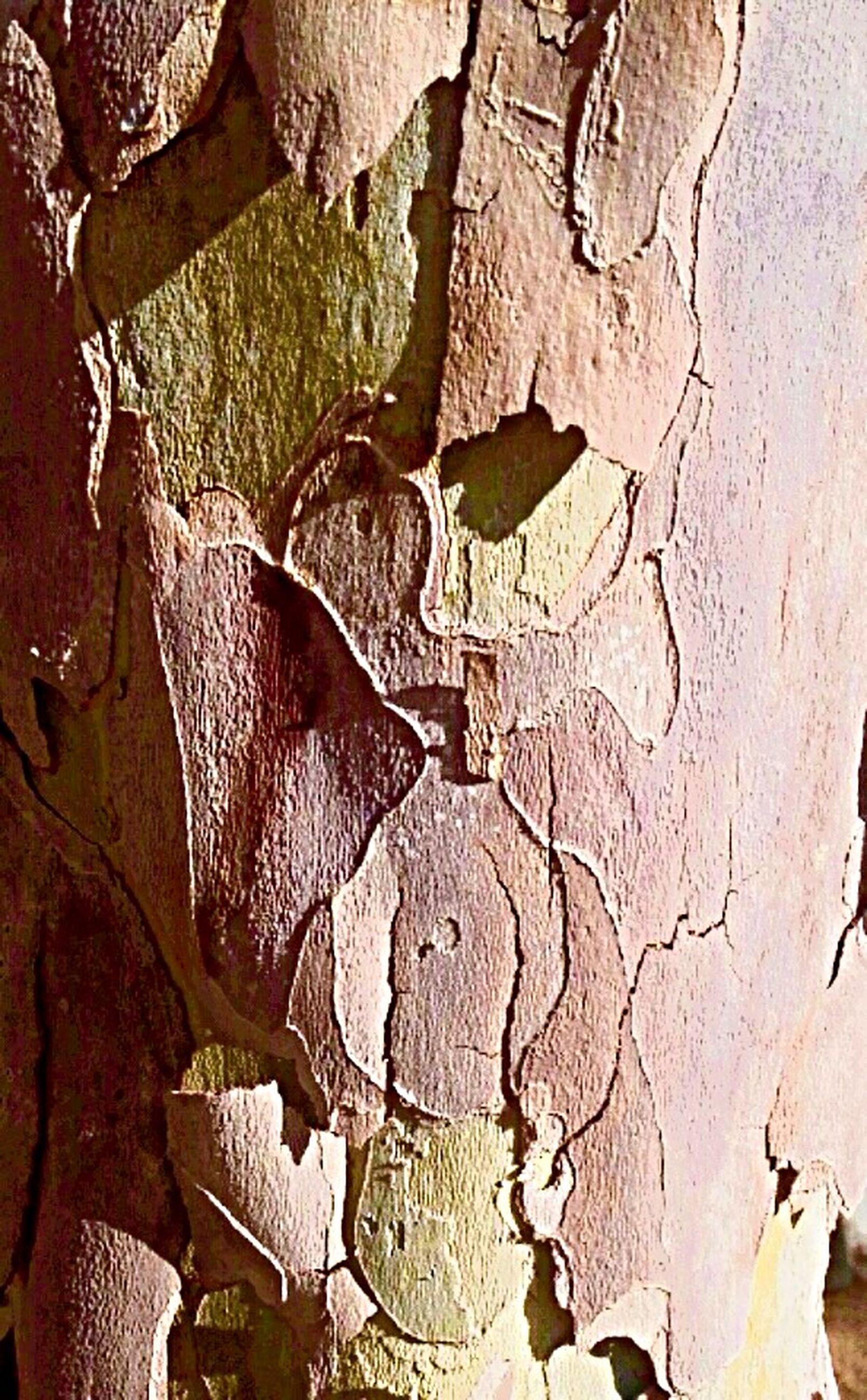 animal themes, animals in the wild, one animal, wildlife, wall - building feature, sunlight, outdoors, bird, high angle view, day, textured, wall, shadow, tree trunk, nature, close-up, no people, built structure, pattern, architecture