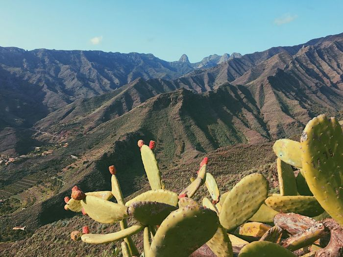 Cactus Growing On Mountain Against Sky