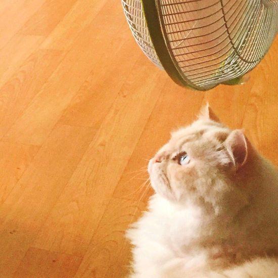 Look Heema Cat Something