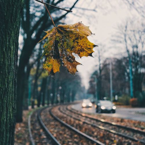 Rotting leaf over railroad tracks