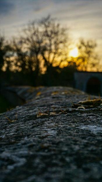 Abendstimmung Sunset Road Tire Track Surface Level Sky Close-up Landscape