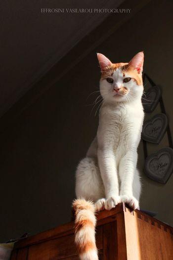Alex Posing Resqued Kitten EyeEm Selects Pets Kitten Portrait Sitting Feline Domestic Cat Looking At Camera Cute Beauty Whisker Ginger Cat Stray Animal