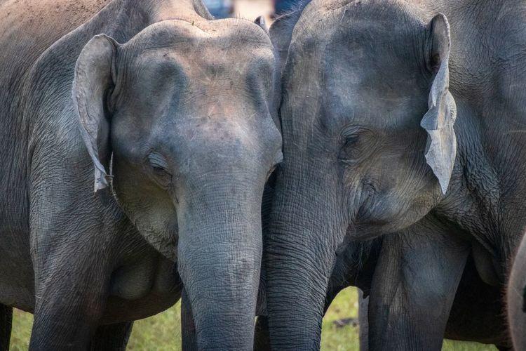 I love you baby😙 Animal Themes Elephants Elephant ♥ Elephant Nature Park Elephant Calf Elephant Animals Architecture Animal Wildlife Togetherness Animal Trunk Animal Family Two Animals Animal Head