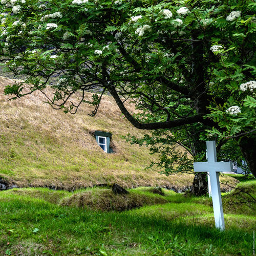 Église et cimetière de Hof Absence Branch Church Cimetiere Cross Day Garden Graveyard Graveyard Beauty Green Green Color Iceland Iceland_collection Leaf Narrow Nature Outdoors Plant Relaxing Moments Roof The Way Forward Tree Tree Trunk Turf Roof Window