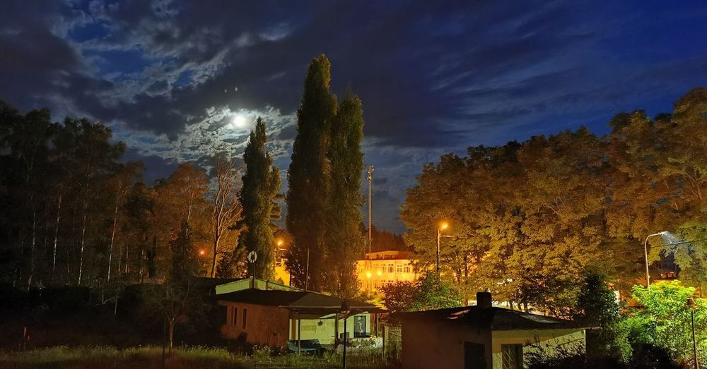 Trees and buildings against sky at night