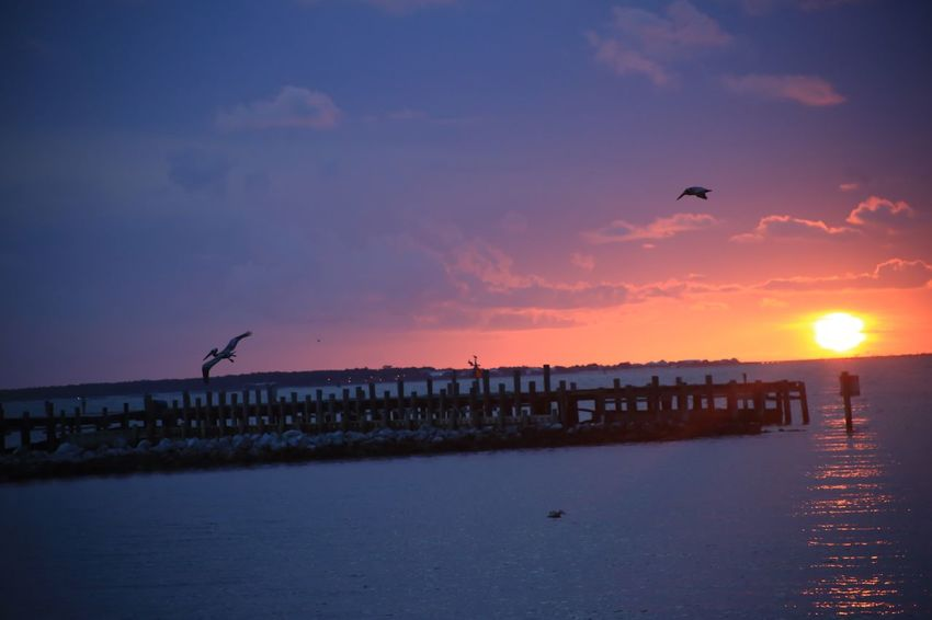 Pelican Pier Clouds Ocean Fort Morgan Alabama Mobile Bay Sky Sunset Water Animal Themes Vertebrate Bird Animal Sea Beauty In Nature Animals In The Wild Animal Wildlife Scenics - Nature Flying Group Of Animals Nature Orange Color Beach Sun Architecture No People