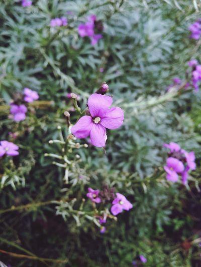 Flower Pink Flowers Flower Purple Flower