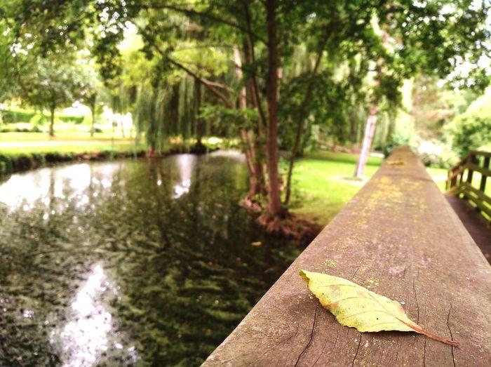 Square Bridge Tree Water Sky Leaves