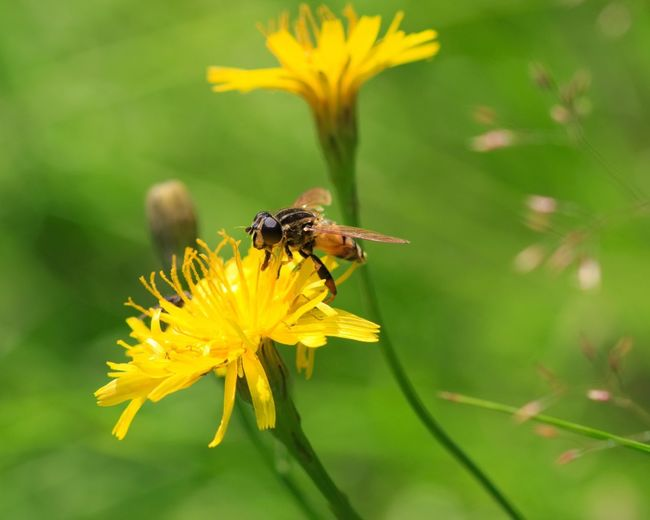 Wasp Wasp Flower Flowers Insect The Essence Of Summer