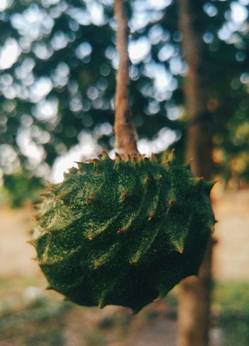 Guyabano Eyeem Philippines Nature Guyabano Soursop Fruit Bokeh Blur Depth On Field LG G4 Lg G4 Photography Mobile Photography Patterns & Textures Textures