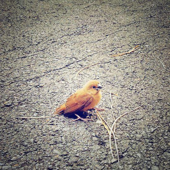A Bird Hatchling Nature Animal