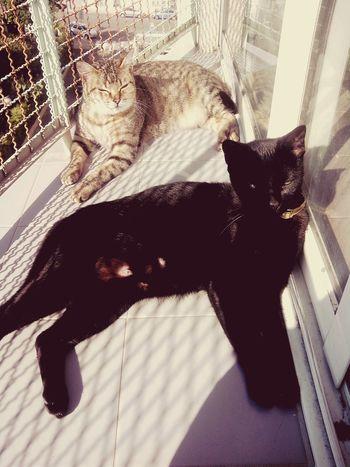 Sol Boavida ... Vida de gato (minha preta e garfield)