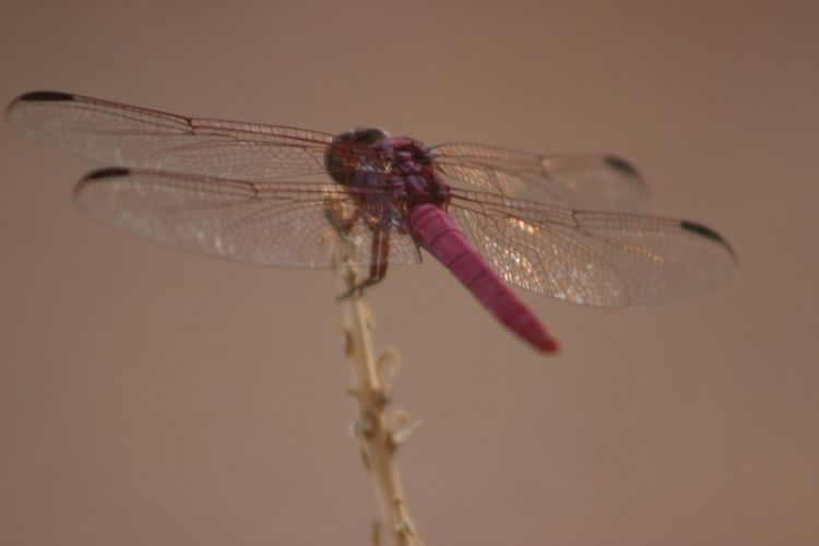 Close-up of dragonfly on stem