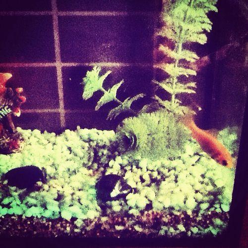 My new fish ! It name is titan !cest mon nouveau poisson il s'apelle Titan France Anglais Nouveau Animals New Nature Photo