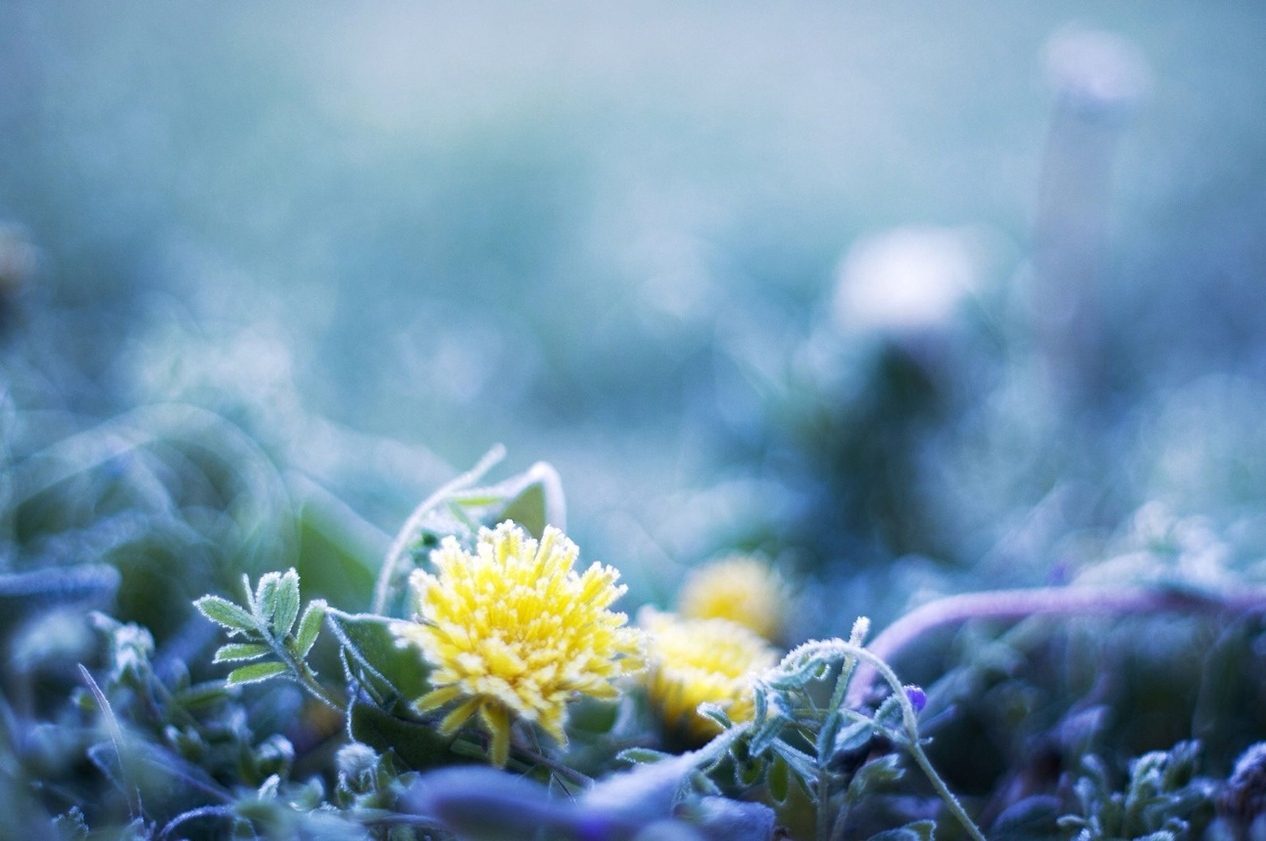 flower, fragility, focus on foreground, close-up, plant, nature, freshness, selective focus, beauty in nature, growth, petal, blooming, animal themes, outdoors, day, one animal, yellow, flower head, animals in the wild, cold temperature