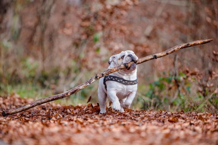 Portrait of a dog on land