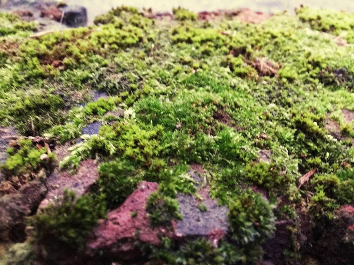 Moss Bricks Walls Growth Nature Plant No People Green Color High Angle View Day Close-up Outdoors Beauty In Nature Freshness London