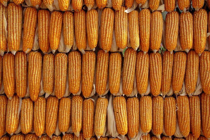 Full Frame Shot Of Corn For Sale In Market