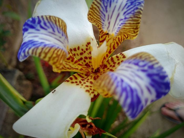 Day Orchid Flower Passion Flower Iris - Plant Pollen Hibiscus Plant Life Blooming