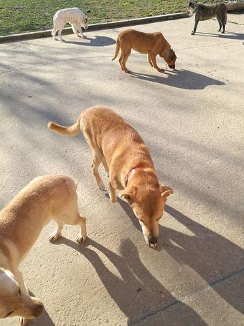 EyeEm Selects Pets Dog Shadow Sand Sunlight