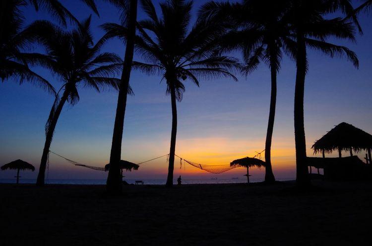 Sri Lanka Sunset Sri Lanka Twilight Tropical Paradise End Of The Day Chilling Hammock Skyporn Sunrise_sunsets_aroundworld Palm Tree Beach Sunset Silhouette Sea Tree Beauty In Nature Scenics Vacations Tourist Resort Horizon Over Water Travel Destinations